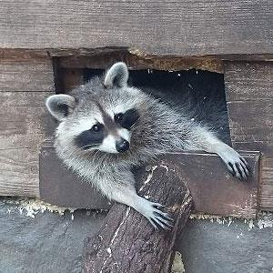 Atlanta Wildlife Removal | Peachtree Pest Control | Atlanta